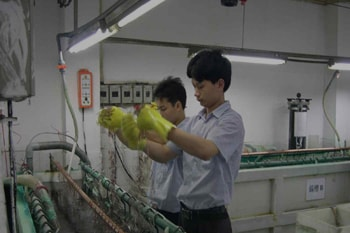 manufacturing-6